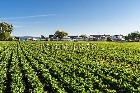 vegetable field and greenhouses reichenau island