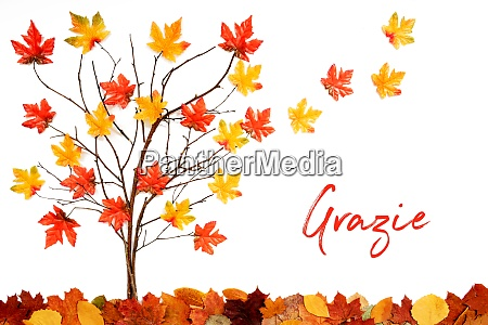 tree with colorful leaf decoration leaves