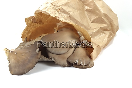 large plant mushrooms grown for food