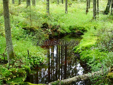 mysterious autumn forest reflected in the