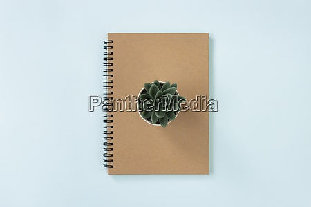 brown cover spiral notebook and kalanchoe
