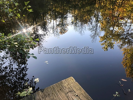 wooden dock and forest lake reflecting