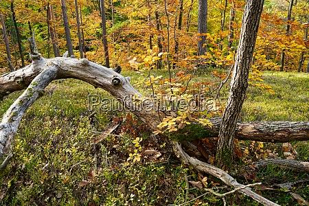deciduous trees autumn