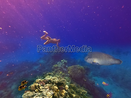 underwater, world., coral, fishes, of, red - 28973361