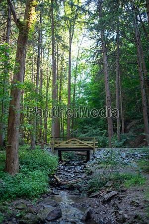 wooden foot bridge in a