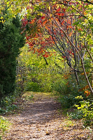 forest paths of autumn forest