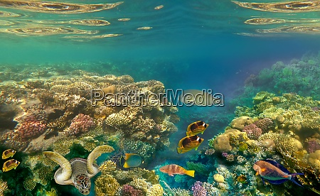 underwater, world., coral, fishes, of, red - 28976207