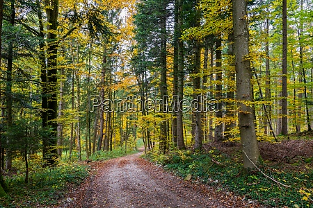 beautiful hike through the autumn forest