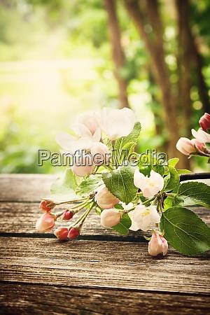 apple flowers on wooden board