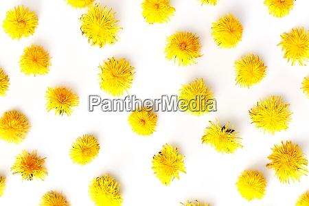 flowers frame pattern dandelions summer concept
