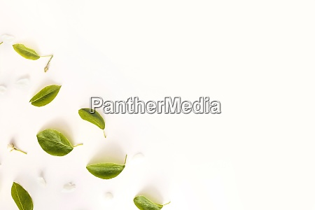 leaves frame on white background top