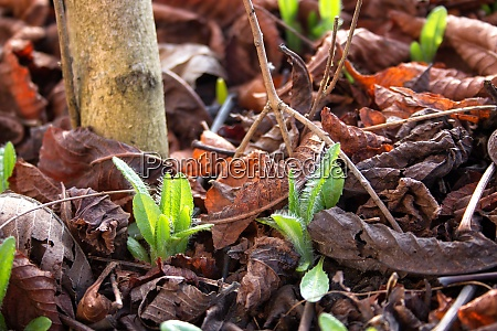 seedlings coming out in early spring