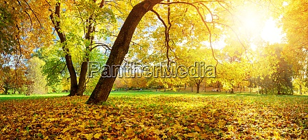 trees on the field in autumn