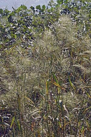 close up image of wild rice