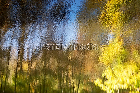 abstract autumn woodland reflected in flowing