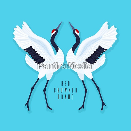 pair of red crowned cranes and