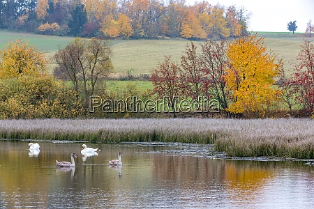 the cool autumn morning at the