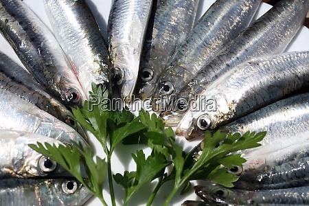 fresh salt water sardines