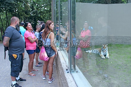 people watch tiger through glass of