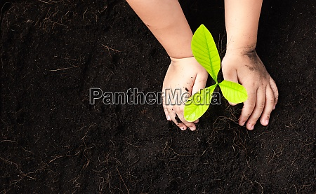 child hand planting young tree seedling