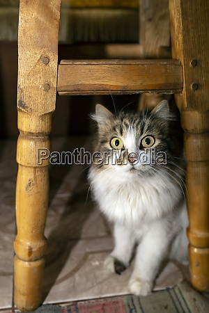 a gray white cat sits under
