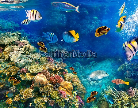 underwater, world., coral, fishes, of, red - 28999252