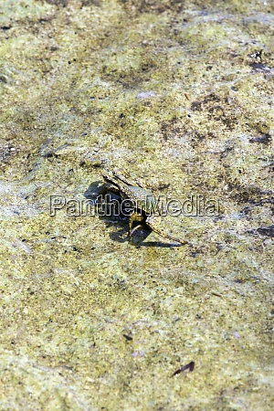 crab seen in low tide during