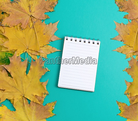 open notebook in line with white