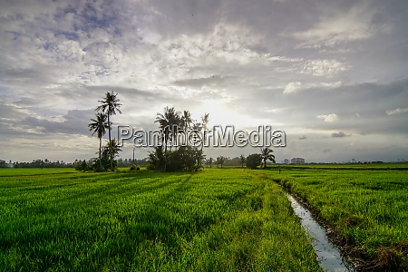amazing sky at paddy field
