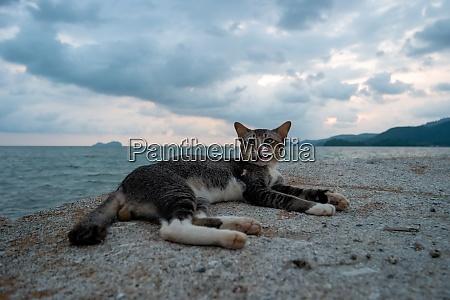 a cat rest at rock