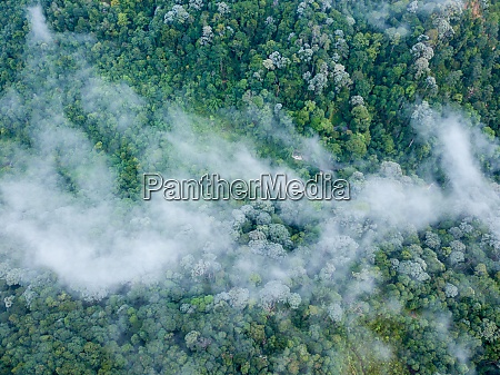 aerial view sea cloud over rainforest