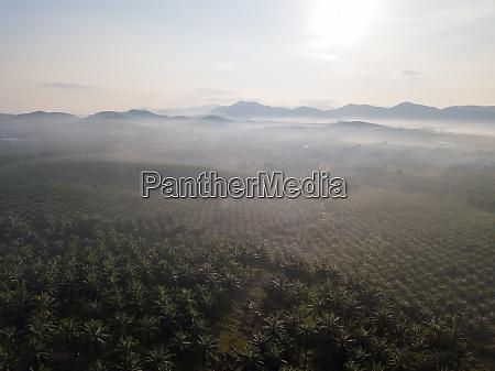 aerial view foggy oil palm estate
