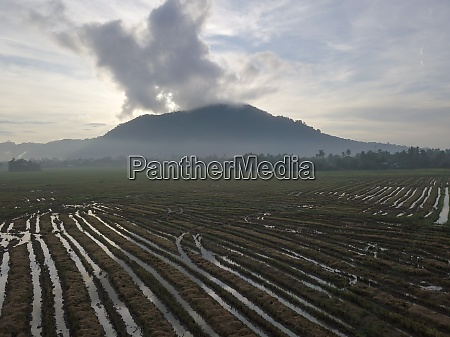 aerial view paddy field after harvested