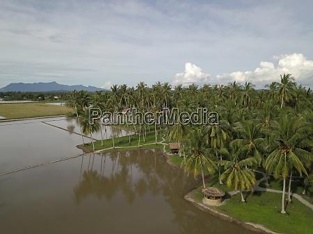 aerial view coconut farm