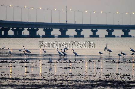 cranes bird rest at coastal