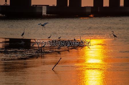 crane birds search food under bridge
