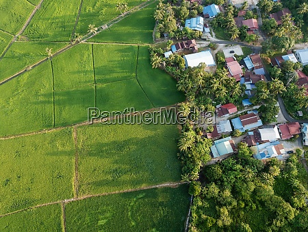 aerial top down view green paddy