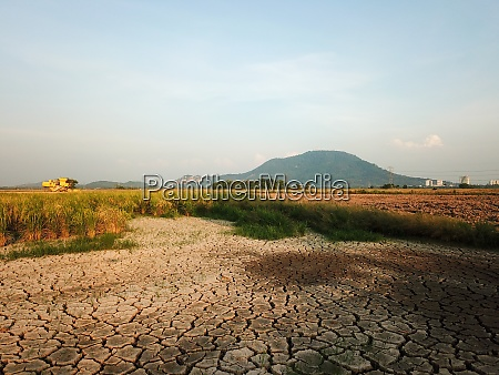 dry land at paddy field