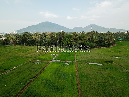 aerial view green scenery