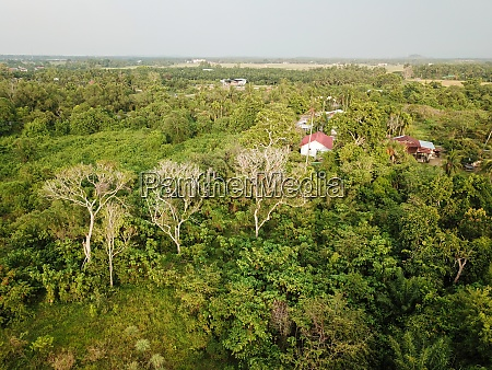 aerial view bald trees at green
