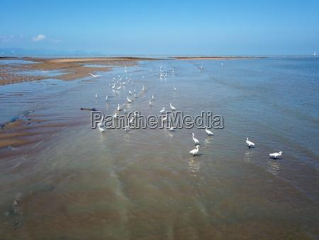 crane birds rest at coastal during