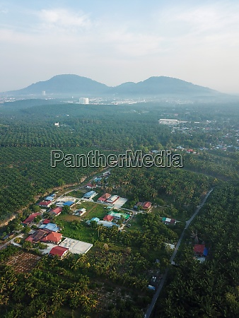 oil palm plantation near village