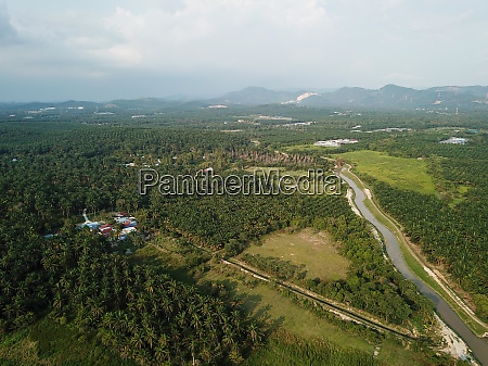 aerial view oil palm estate in