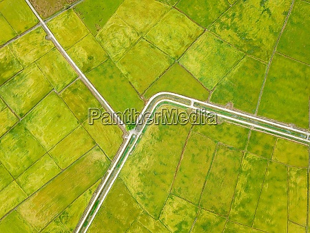 aerial look down green paddy field