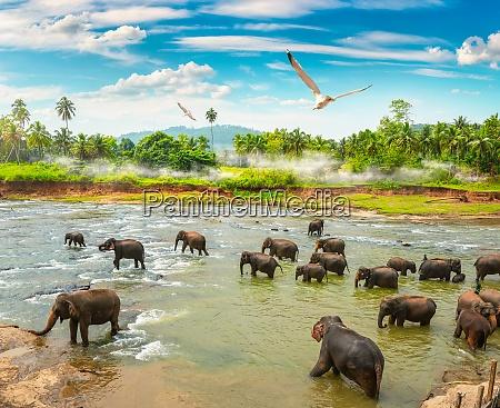 elephants and jungle
