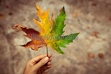 beauty of autumn nature
