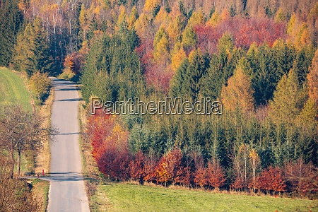 autumn forest nature vivid fall colors