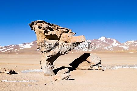 stone tree rock bolivia
