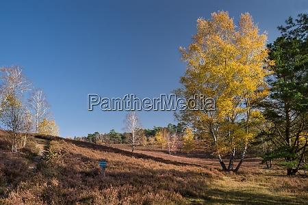 late fall fischbek heath