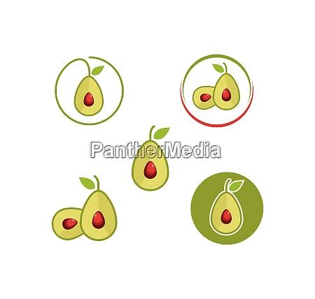 avocado icon illustration vector